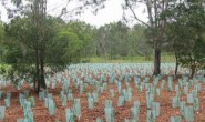 revegetation_million trees project
